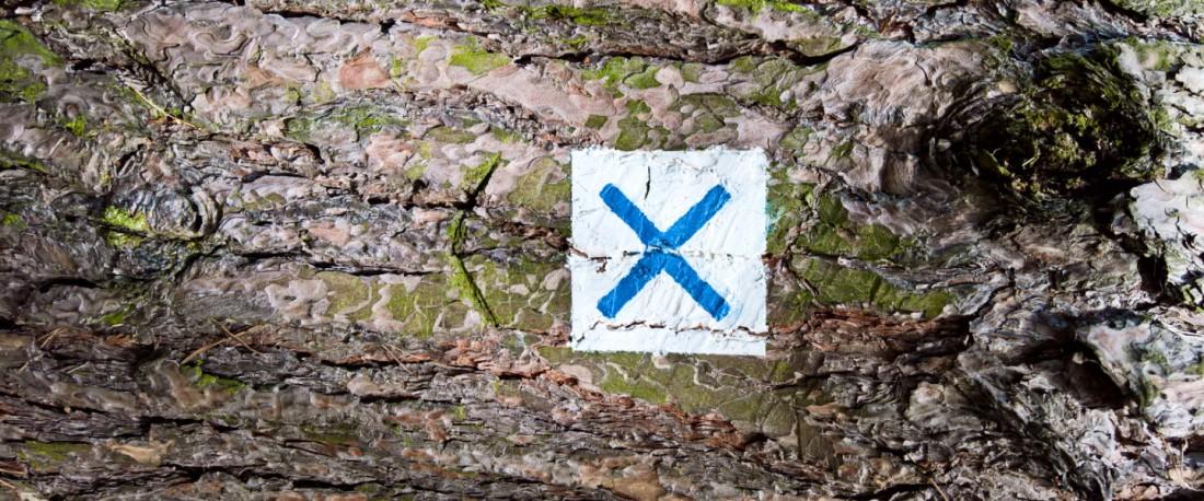 Baumrinde mit einem aufgemaltem rechteckigen Symbol