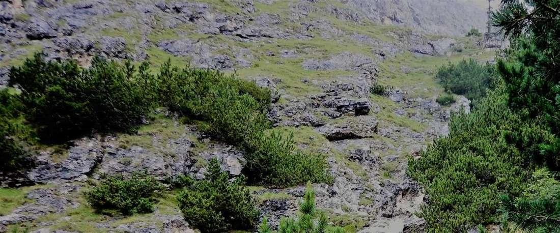 Gebirge mit Dickicht