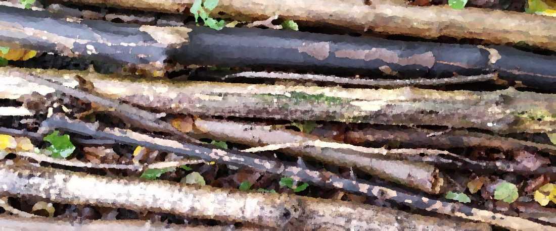 feuchte Äste liegen auf dem Boden