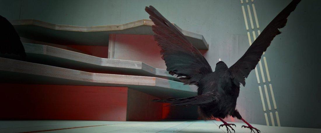 Schwarzer Vogel mit gespreizten Flügeln